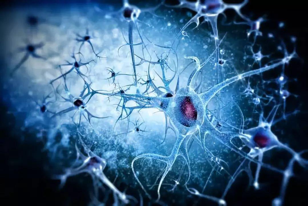 谷歌最新AI算法 递归神经网络绘制大脑神经图像