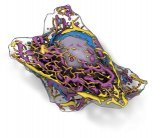 利用深度学习对人体活细胞进行结构预测