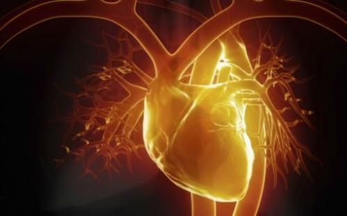 利用动物展开实现,实现用1平方英寸芯片做出模拟心脏