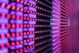 鸿海旗下的eLux宣布在流体装配与定位技术取得专利,能达到最大装配速度