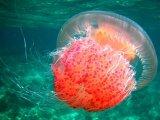 一种柔软的机器人抓手,专门捕获海底柔软生物