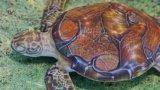 对抗性攻击欺骗图像识别算法将3D打印乌龟认作步枪