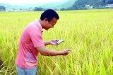 """推进""""互联网+农业"""",让手机成为""""新农具"""""""