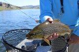 LoRa系统投入智能养殖渔业,实现更高养殖效益