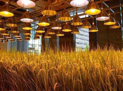 LED植物照明行业现状如何?未来发展趋势又如