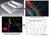 Hesperos公司利用多器官微流控设备系统检测...