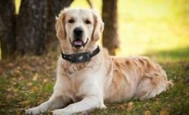 日本发布宠物狗情绪可视化的可穿戴式终端,5种颜色...