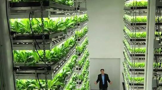 GE将打造欧洲最大的室内农场,首批作物生产预计将于今年秋季开始