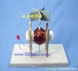 如何制作一个简易的微型风力发电机模型?