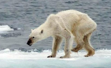 """全球越来越""""热"""",希望区块链技术助力于环境保护"""