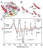 如何利用红外传感器追踪蛋白质构象变化设计出高效药物?