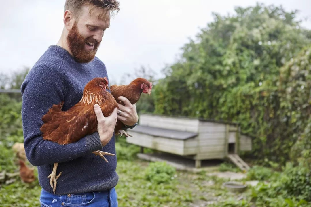 人工智能拯救小鸡 科技改变生活