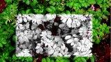 华科尔与Agrowing联合推出多光谱无人机方案