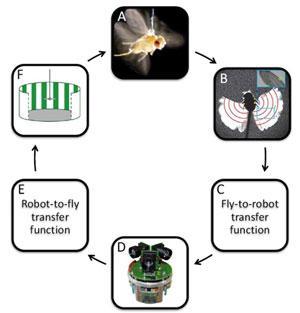 借助CompactRIO控制器和LabVIEW进行飞虫的飞行控制研究