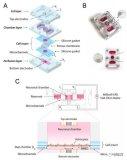 Hesperos创建用于药物测试人体芯片模型