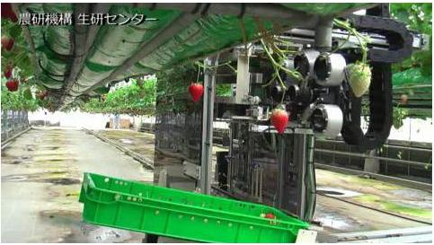 英国正在研发可以在野外条件下自主工作的草莓采集机...