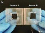 北京林业大学研发基于碳化皱纹纸的柔性传感器