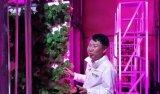 苏格兰一垂直农场以LED照明降低50%能耗