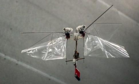 荷兰大学研制出DelFly Nimble,一款可自治的飞行机器人