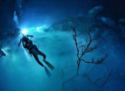 日本成功研发出能自动在海底移动并捕获生物的机器人