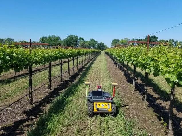 RAPID机器人:能够为每个区块定制适宜的水量,帮助灌溉葡萄
