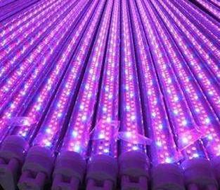 国外一公司利用LED照明种植医用大麻