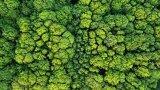 区块链技术可以解决八大环境问题的挑战