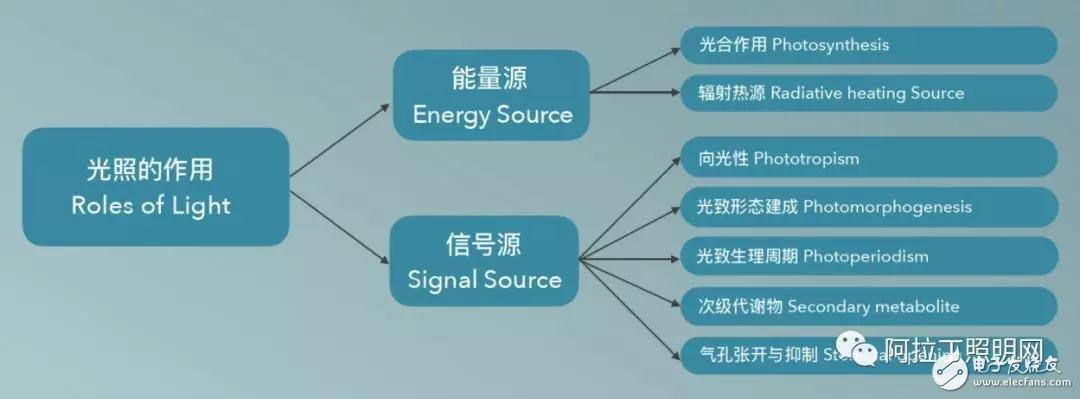 植物照明灯具生产企业的发展前景如何