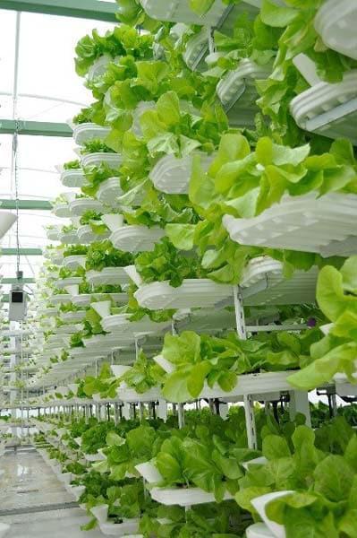 农场垂直发展解决粮食危机,打造智慧城市