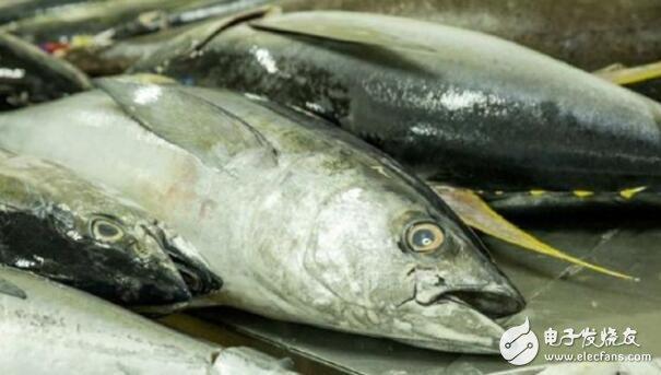 区块链技术可以改善金枪鱼的可追溯性,用于打击非法捕鱼