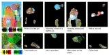基于对图片的语音描述,可以学习在图片中辨认目标物体