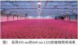 光照对于植物生长的影响——光合作用和光敏色素