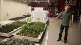 未来的农民安格斯,能自己种菜的美国机器人
