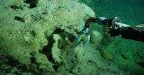 水下机器人: 哈佛大学开发出新型柔软机器人手臂