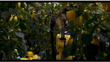 Sweeper机器人:利用传感器确定甜椒是否成熟,用脸采摘
