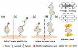 韩国开发出基于适体的夹层式生物传感器
