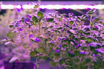 日亚化学宣布与荷兰一公司合作开拓LED园艺照明市...