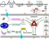 首次利用DNA折纸结构为载体高效且可控地实现了化...