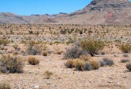 美国律师杰弗里伯恩斯计划在沙漠中建造一座加密货币...