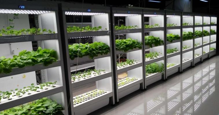日本LED植物工厂发展现状如何