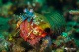 一个研究小组以螳螂虾为灵感设计了一套成像系统