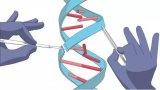 CRISPR-Cas9基因编辑技术貌似再次遭遇挑...