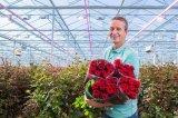 专用玫瑰花光谱搭配LED顶光模组搭载提高玫瑰产量