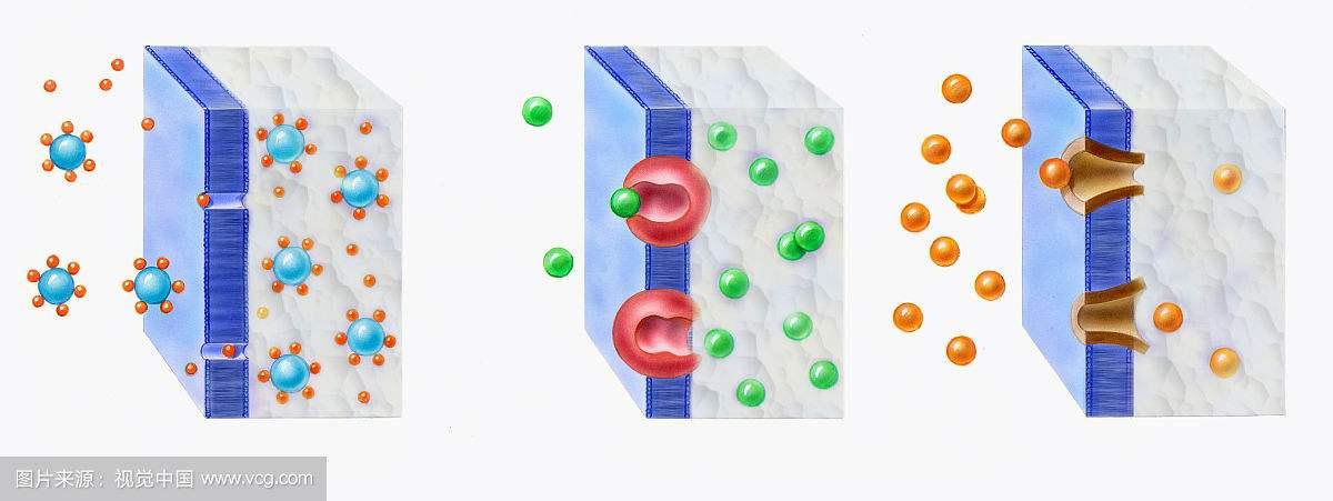 斯克里普斯科学家发现一种称为OSCA和TMEM63的细胞蛋白压力传感器