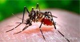 波多黎各一项研究有望通过深度学习大大地降低蚊子给人类带来的致命威胁