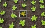 智能植物识别软件让你轻松变成农作物达人