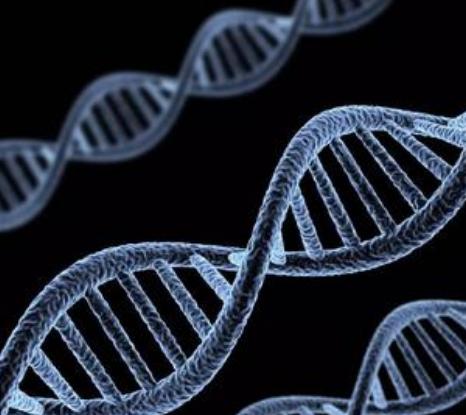 对于基因编辑技术 人类恐惧比欣喜多