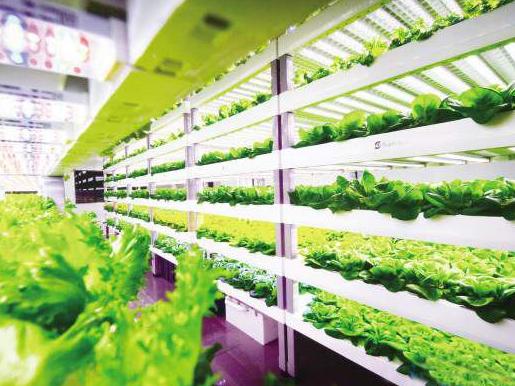 世界首个地下全自动植物工厂可实现LED光照和营养...