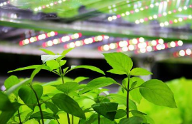 意大利建立起首个LED植物照明垂直培育农场