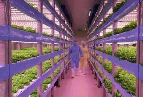 京东植物工厂落户北京通州 占地总面积达1万多平米